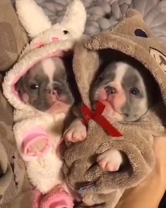 Filhotinhos Em Roupinhas Super Fofas, Olha Só Estas Carinhas!!!!