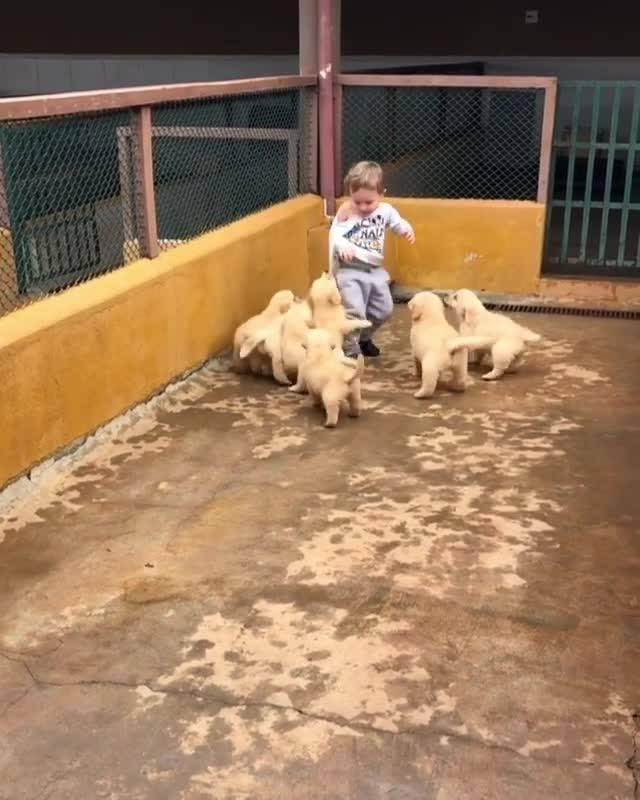 Garotinho Brincando Com Filhotinhos Fofos, Veja Que Ataque De Fofura!!!