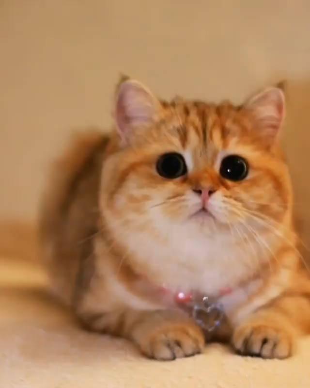 Gatinha Linda Com Pelo Amarelo E Olhos Pretinhos, Que Fofura!!!