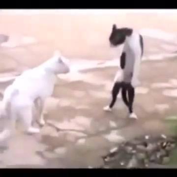 Gatinho Dançando Thriller
