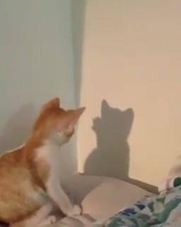 Gato Invocado Com Algo