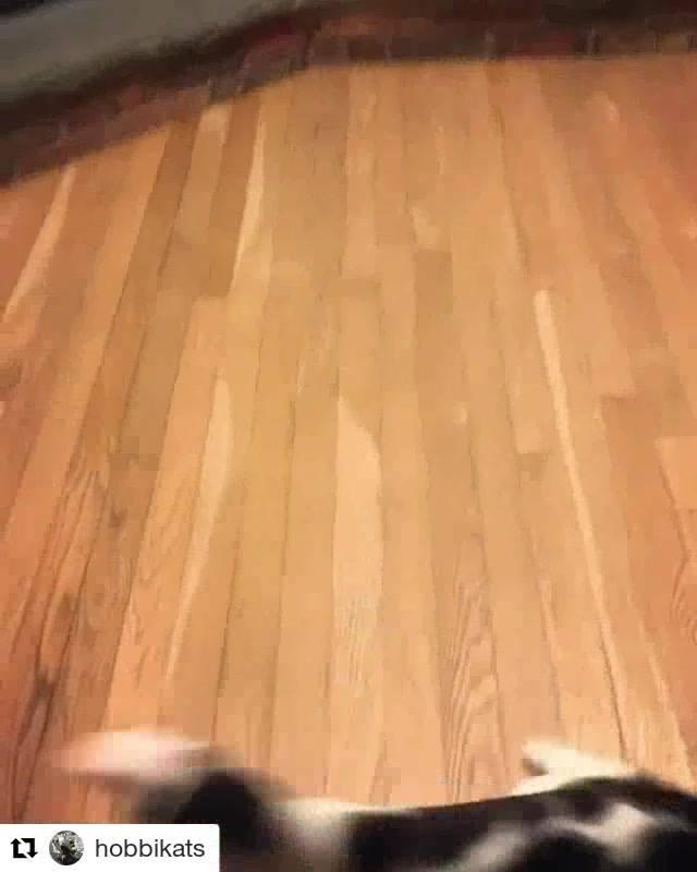 Gato Muito Louco Dançando, Para Compartilhar No Facebook!!!
