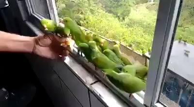 Hora Da Comida!