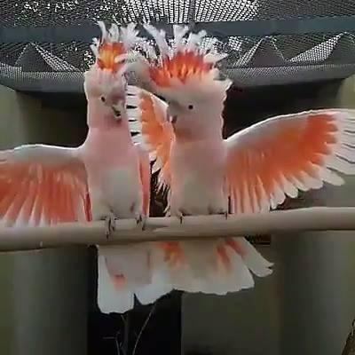 Beleza Da Natureza Retratada Nos Pássaros, Simplesmente Encantador!