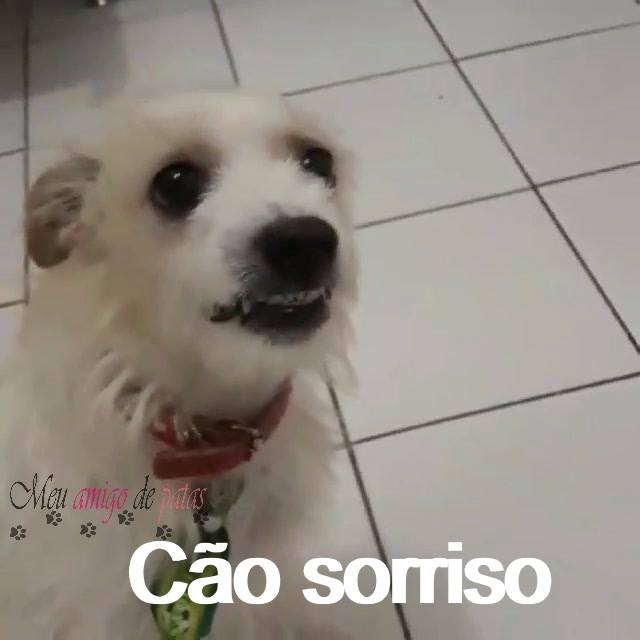 O Sorriso Mais Lindo Que Você Vai Ver Hoje, Que Cachorro Lindo!