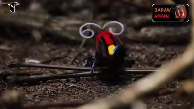 Top 6 Pássaros Mais Diferentes Que Você Já Viu, Impressionante!
