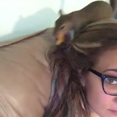 Vídeo Com Esquilos Fofinhos, Olha Só Como Eles Aprontam, Confira!!!