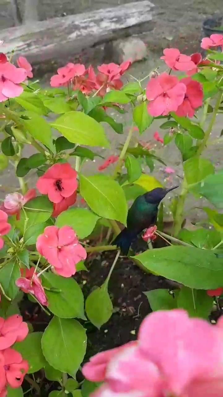 Beija-Flor Sentado Em Um Galho De Uma Flor, Veja Que Tranquilidade!!!