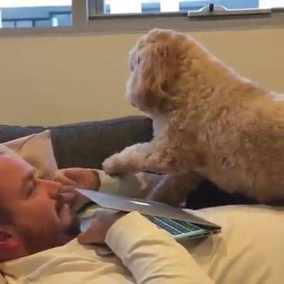 Cachorrinho Pedindo Atenção