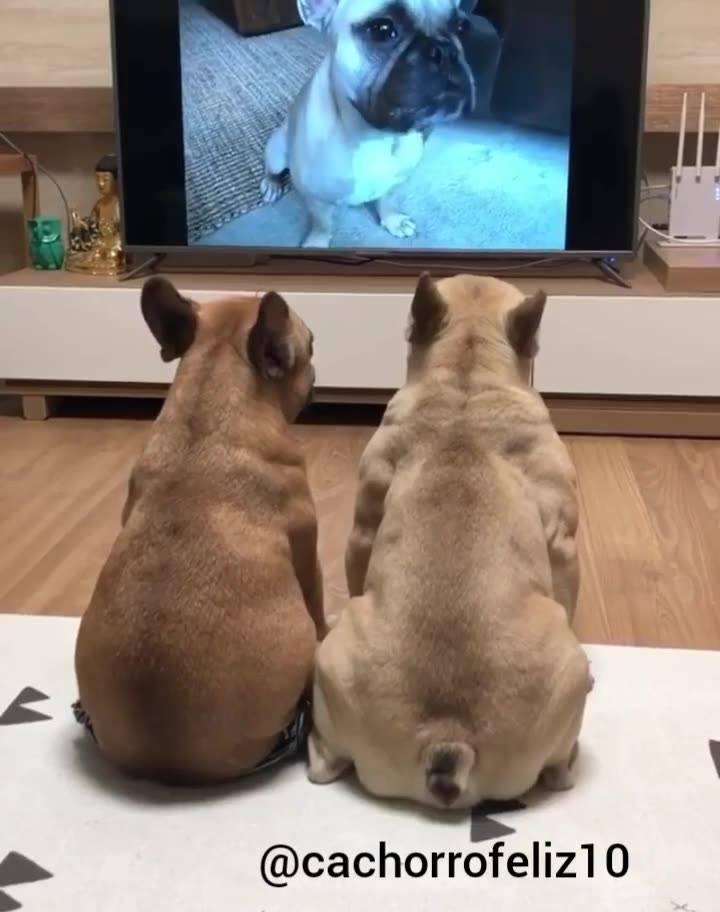 Cachorrinhos Assistindo Filminho, Olha Só Como Estão Quietinhos!!!