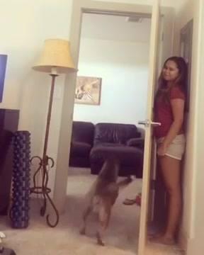Cachorro Não Acha Dona