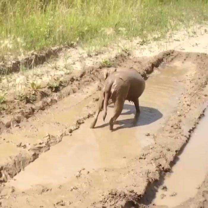 Cachorro Se Esbaldando Na Lama, É Muita Alegria Nas Simples Coisa Da Vida!!!