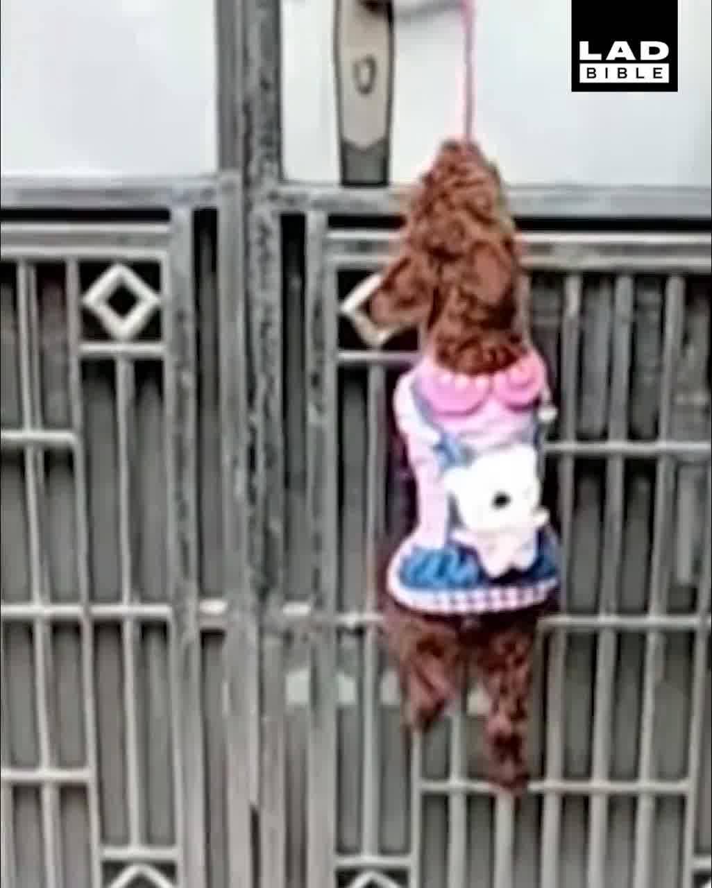 Cachorro Escalando Portão Para Entrar Dentro De Casa, Depois Vem Um Para Fechar!