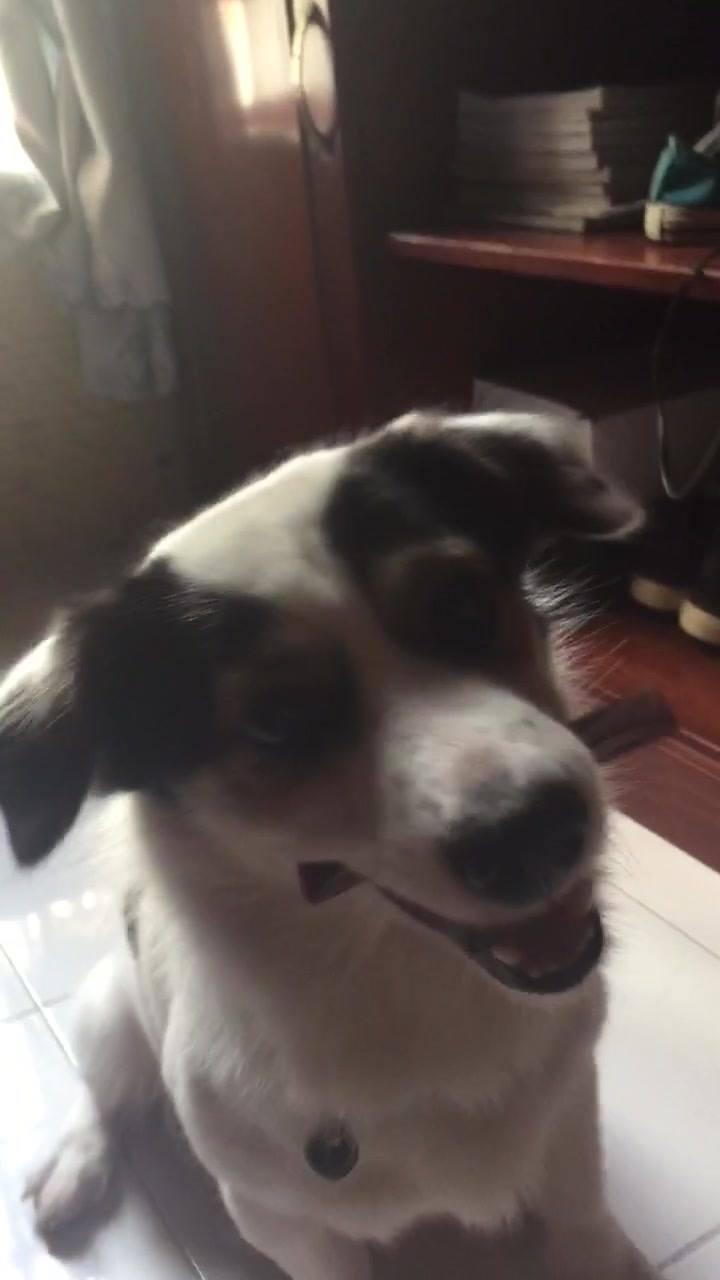 Cachorro Ganhando Seu Petisco Do Dia, É Muita Fofura Para Um Cão Só!