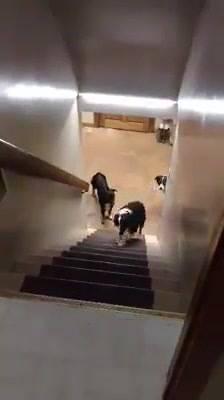 Cães Treinados, Lindos!