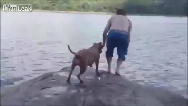 Cão Aflito Ao Ver Dono Na Água