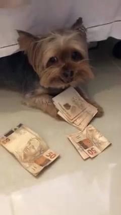 Cão Pega O Dinheiro!
