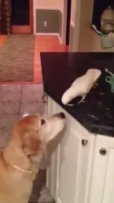 Me Dá Comida?