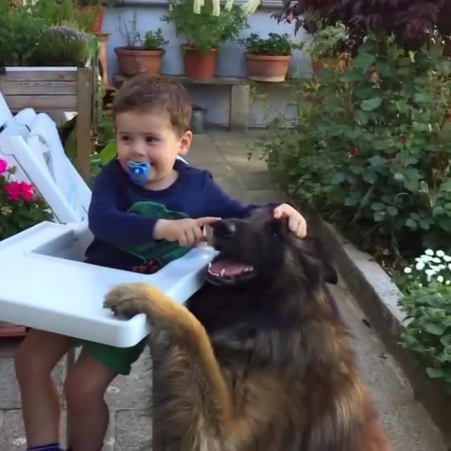 Cachorros E Crianças Se Divertindo, Que Bagunça Alegre Eles Fazem Junto!