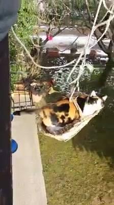 Elevador Para Gato, Ele Fica Bem Quietinho Enquanto Sobe!