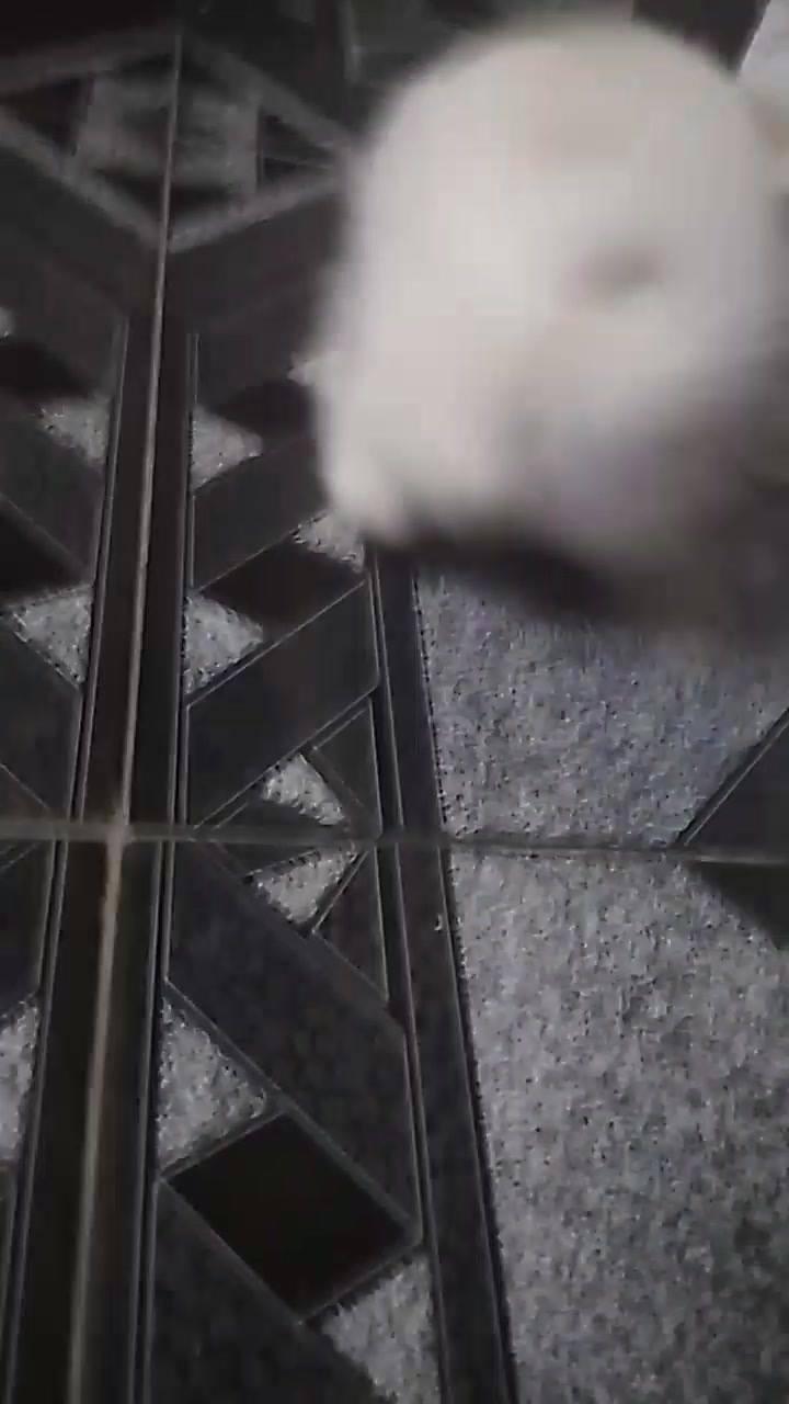 Filhotinho De Cachorro Brincando, Olha Só Este Latidinho Fofinho!!!