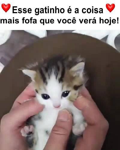 GATO MIANDO O SOM BAIXAR DE UM
