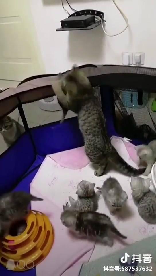 Gatinha Cuidando De Seu Filhotinhos, Olha Só O Cuidado Dela!!!