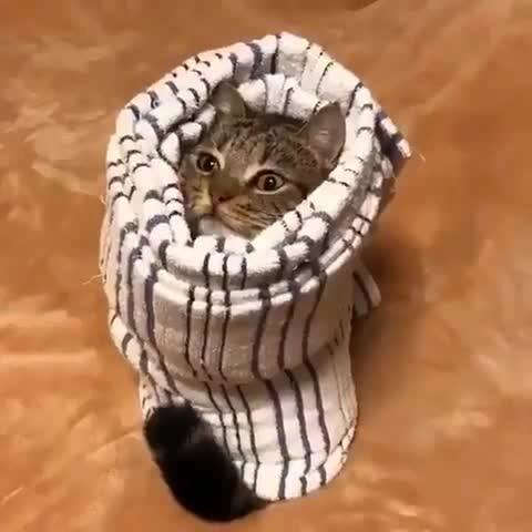 Gatinho Enrolado Na Toalha, Olha Só A Carinha Deste Amiguinho Fofo!!!