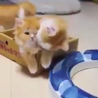 Gatinhos Fazendo Fofuras