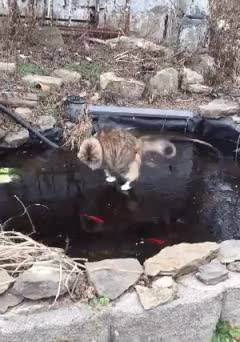 Gato E Lago Congelado