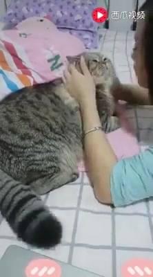 O Gato Mais Preguiçoso