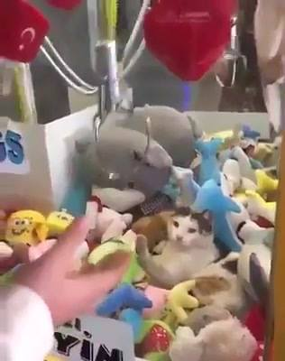 Um Gato De Prêmio?