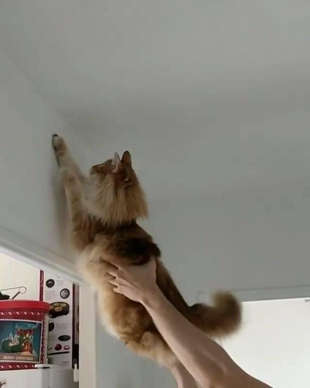 Gato Querendo Pegar Borboletinha Com Ajuda De Seu Dono, Olha Só Que Fofo!!!