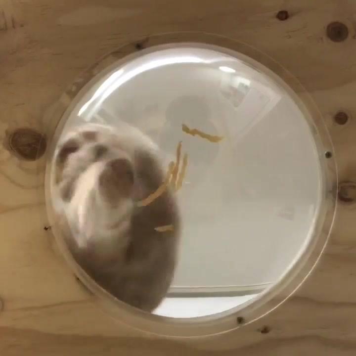 Gato Sendo Filmado Comendo Por Baixo De Sua Vasilha, Confira!
