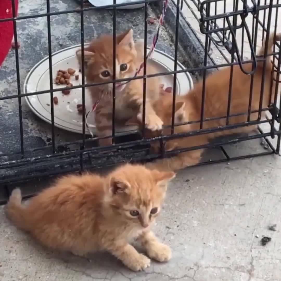 Gatos As Criaturas Mais Encantadoras Que Existem, Impossível Não Ama-Los!!!