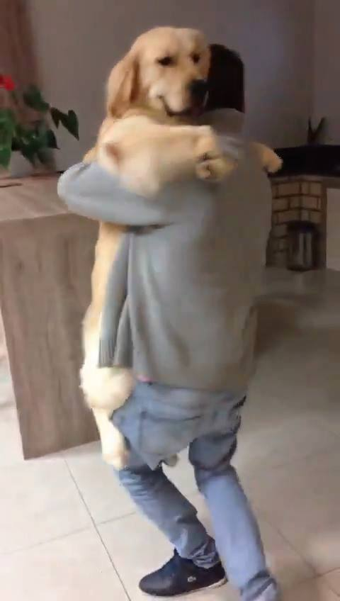 Homem Dançando Com Cachorro,, Quanta Alegria Em Um Video!