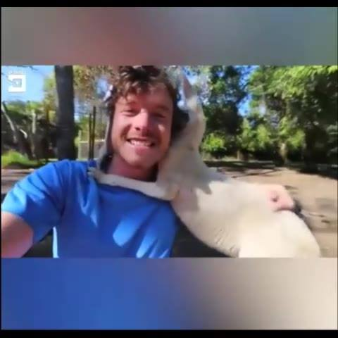 Humanos E Animais Juntos