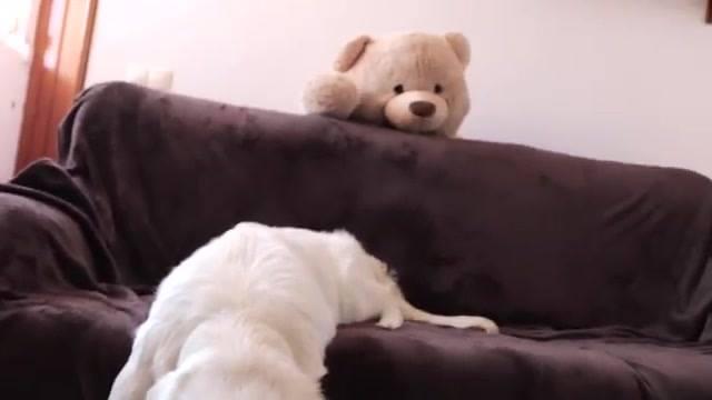 Labrador Ganha Um Ursão