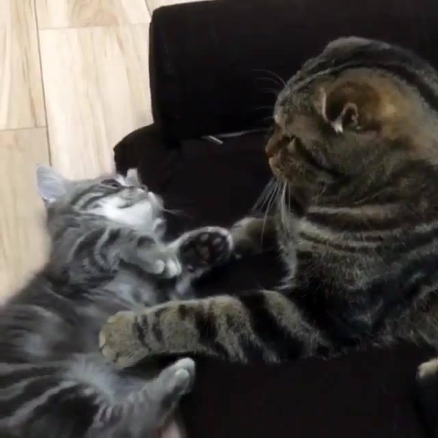 Olhe Para Sua Mãe Como Esse Gatinho Olha Para A Mamãe Dele, Sem Bater, É Claro!