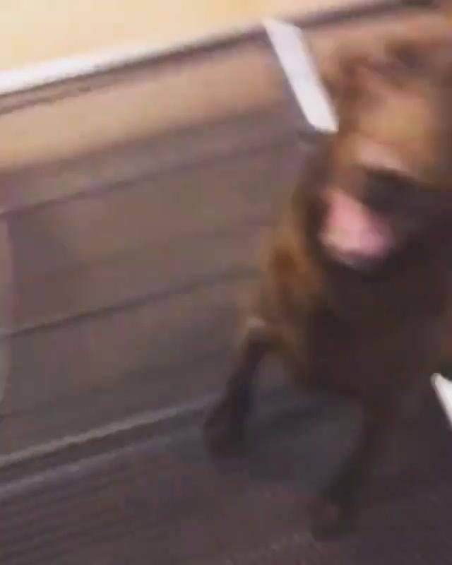 Reação Muito Engraçada Desta Cachorro Na Hora De Receber Sua Comida!!!