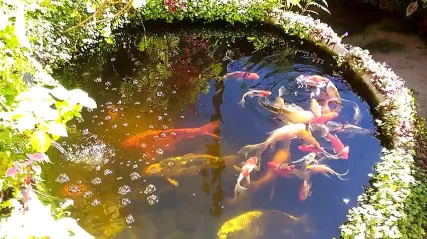 Tanque Cheio De Peixes Lindos Coloridos, Como O Mundo Animal É Incrível!!!