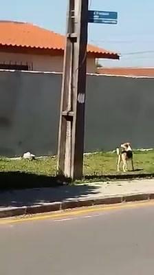 Tentando Pular O Muro