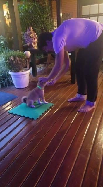 Treinando Um Cachorro A Ficar Sentado, Muito Obediente E Lindo!