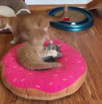 Veja Os Gatinhos Brincando
