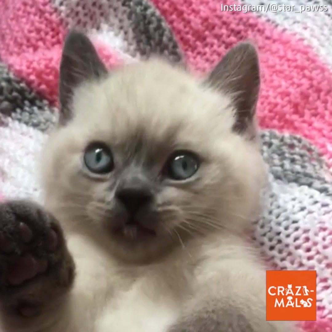 Video De Animais Fazendo Coisas Engraçadas, Você Vai Se Apaixonar Ainda Mais!