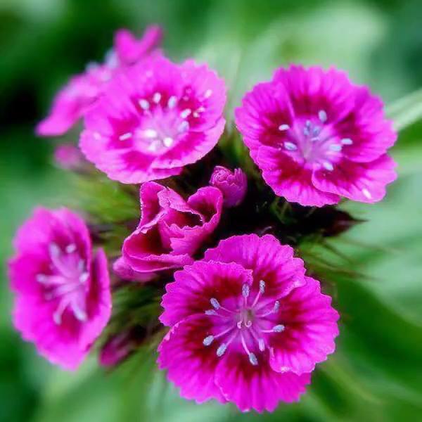 Este Vídeo É Especial Para Todos Que Apreciam As Flores Em Sua Natureza!