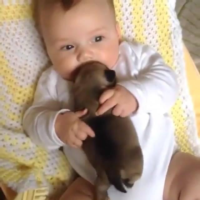 Filhote De Cachorro E Bebê, Existe Dupla Mais Linda? Confira!