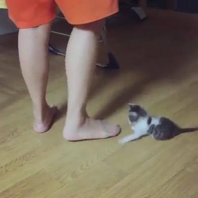 Filhote De Gato Atacando Seu Dono, As Cenas A Seguir São Fortes!