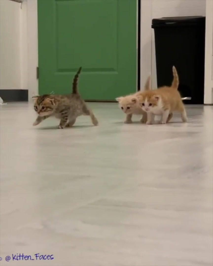 Filhotes De Gatinhos Explorando A Casa, Olha Só Que Fofuras!!!