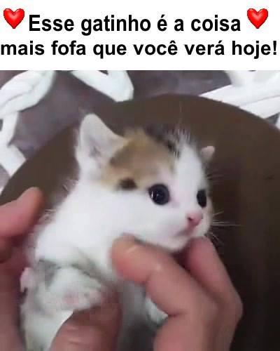 DE GATOS MIANDO BAIXAR PARA SONS